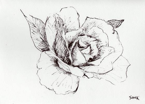 Rose in Gardens of Versailles, Pen and Ink Drawing From France